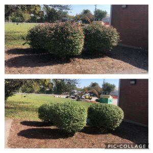 hedge trimming collinsville il