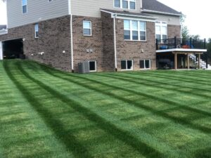 mowed yard st jacob il lawn care service